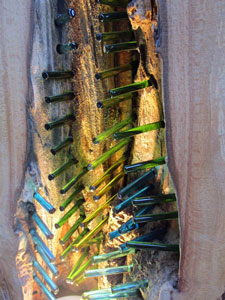 Close up Wood Glass lamp 2